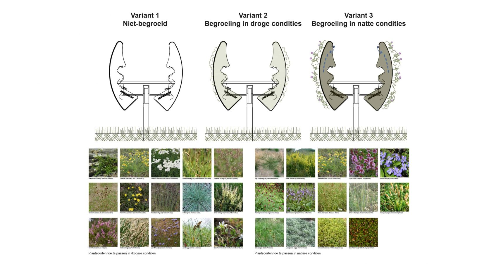 Verschillende plantensoorten voor de geluidsrail op basis van de condities ter plaatse te bepalen