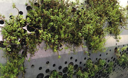 Geluidsrail begroeid met verschillende soorten vegetatie